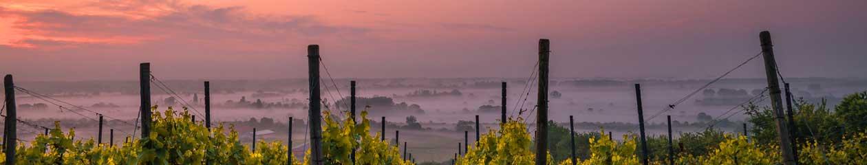 自然派ワインの全知識